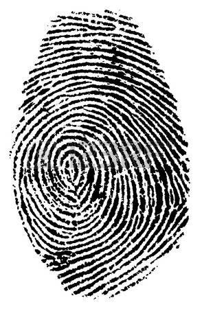 294x450 Fingerprint Vector Icons. Identity Fingerprint Or Thumbprint