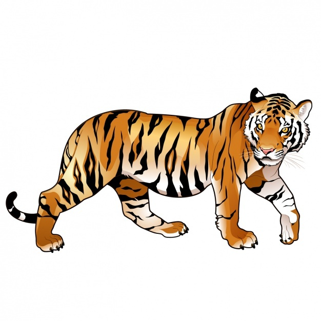 626x626 Tiger Vectors, Photos And Psd Files Free Download