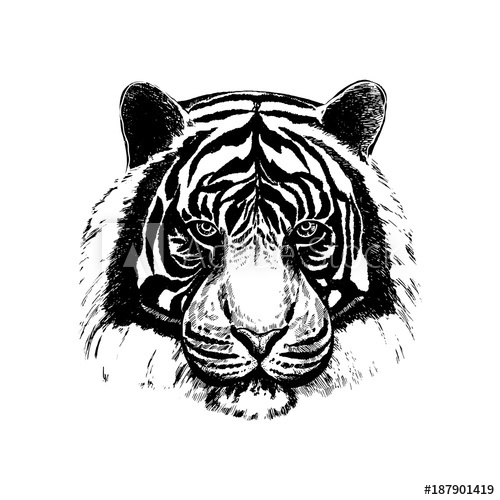 500x500 Hand Drawn Sketch Style Tiger Face. Vector Illustration Isolated