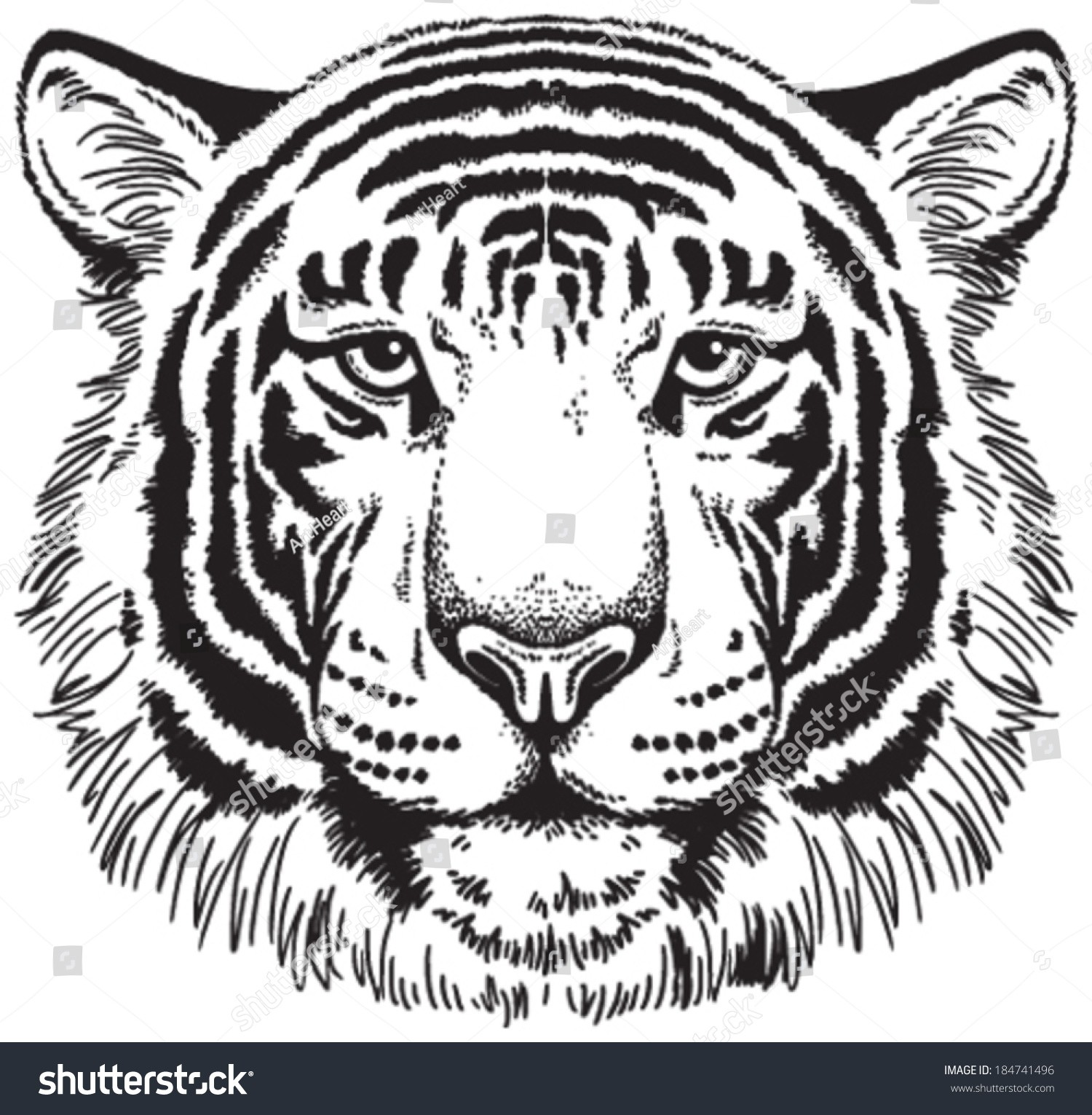 1500x1531 Tiger Face Drawing New Sketch A Tiger Face Tiger Face Black White