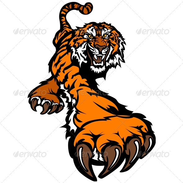 590x590 Tiger Mascot Body Prowling Vector Graphic By Chromaco Graphicriver