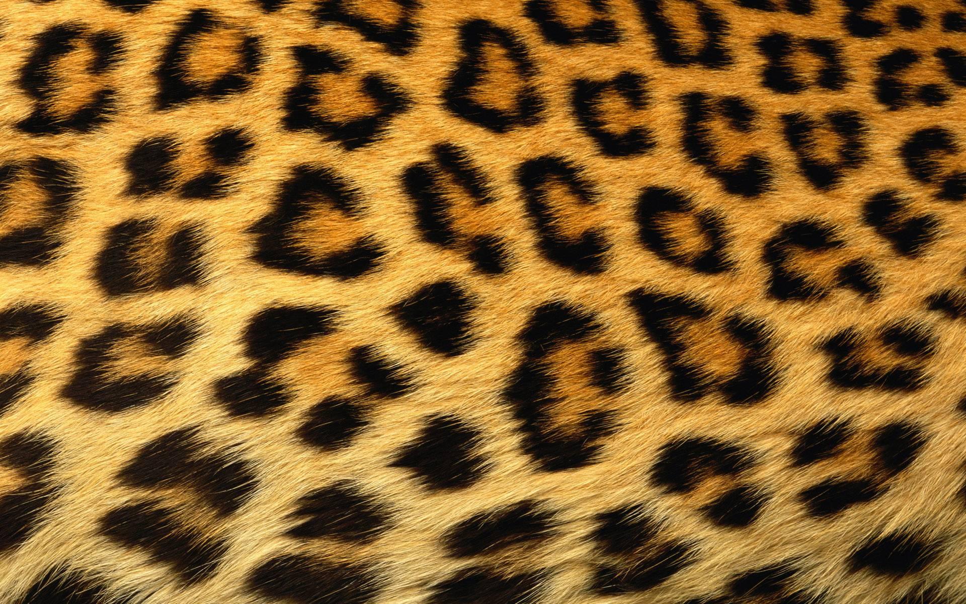 1920x1200 Leopard Skin Clipart Tiger Print