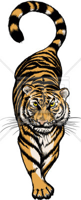 163x400 Isolated Typical Tiger Walking Vector Image Vector Artwork Of