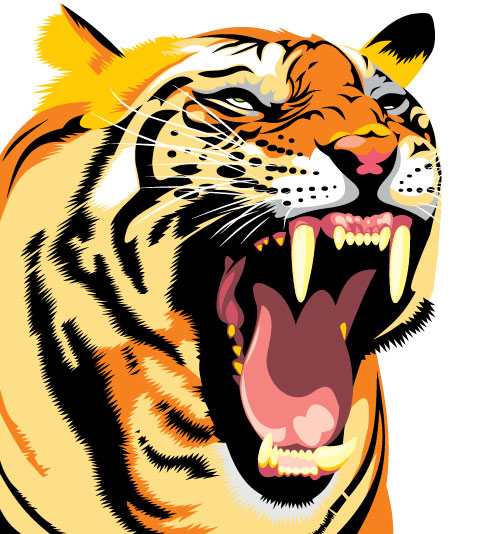 502x534 Set Of Tiger Vector Picture Art 28 Free Download