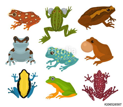 500x435 Frog Vector Froggy Character And Cartoon Amphibian Toad In
