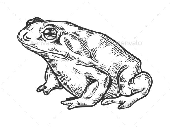 590x443 Hallucinogenic Toad Engraving Vector Illustration By Alexanderpokusay