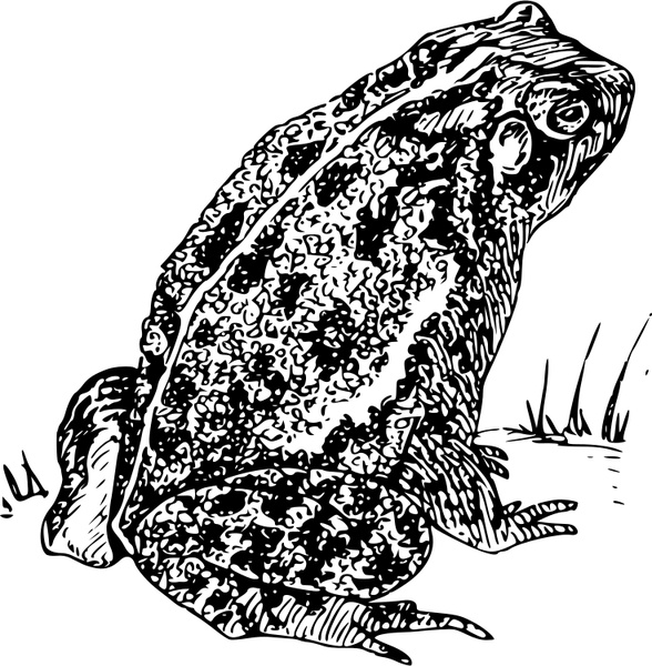 588x600 Toad 1 Free Vector In Open Office Drawing Svg ( .svg ) Vector