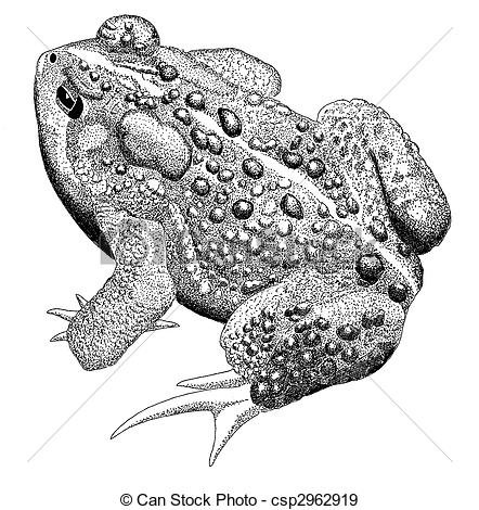 442x470 Drawn Toad Vector