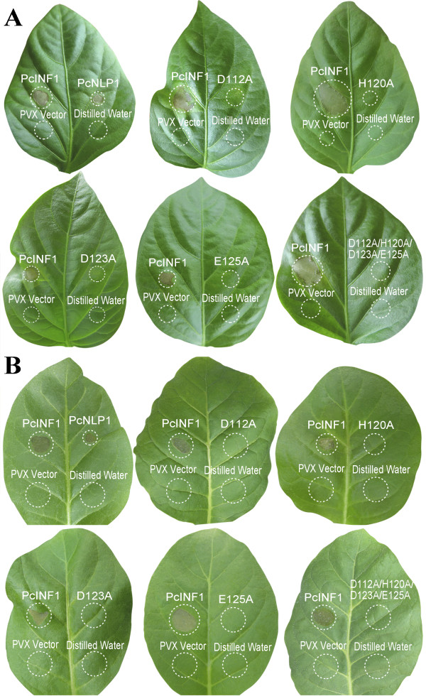 600x980 Response Of Pepper Leaves (A) And Tobacco Leaves (B) Individually