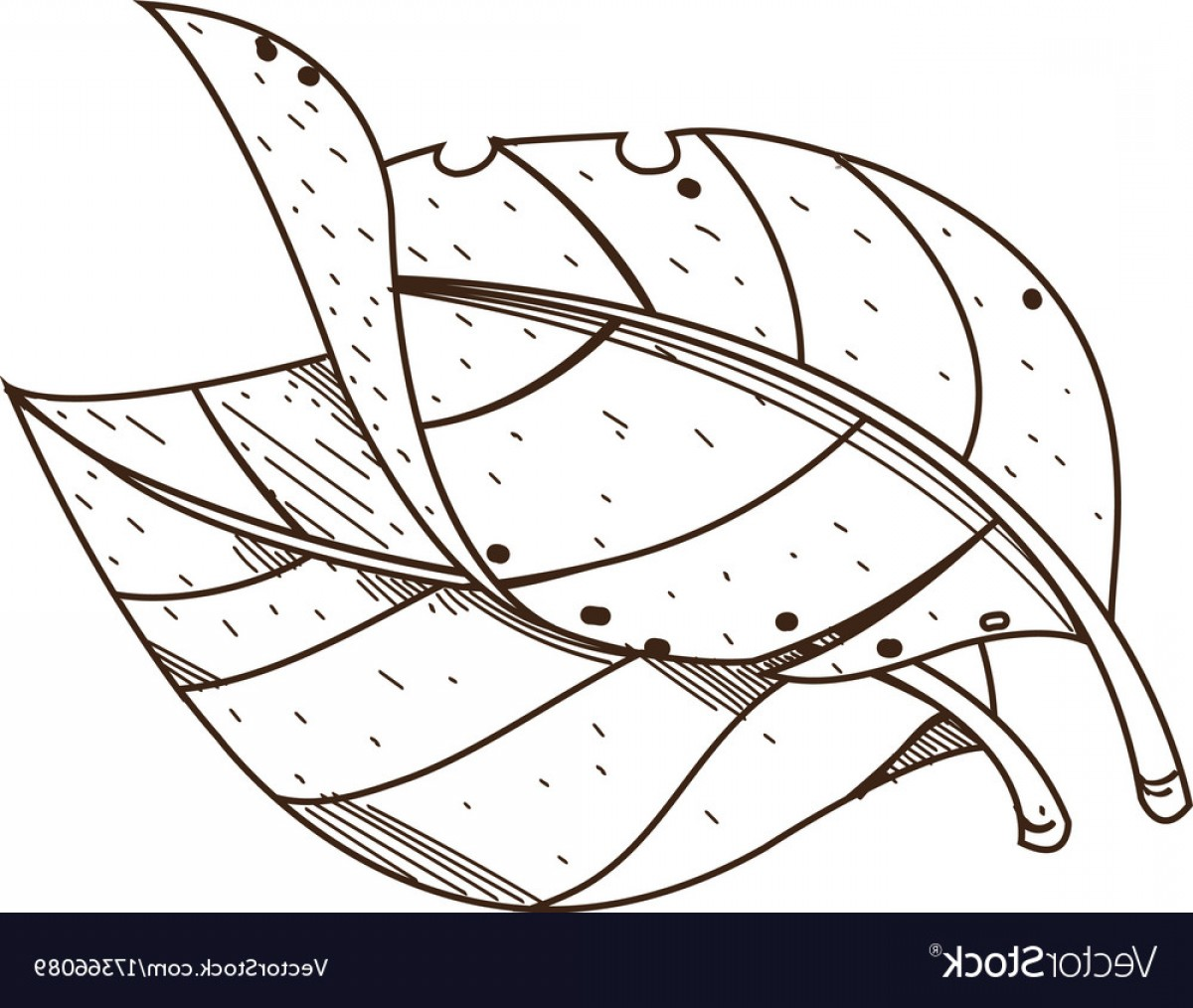 1200x1014 Small Tobacco Leaf Vector Photo That Is Sohadacouri