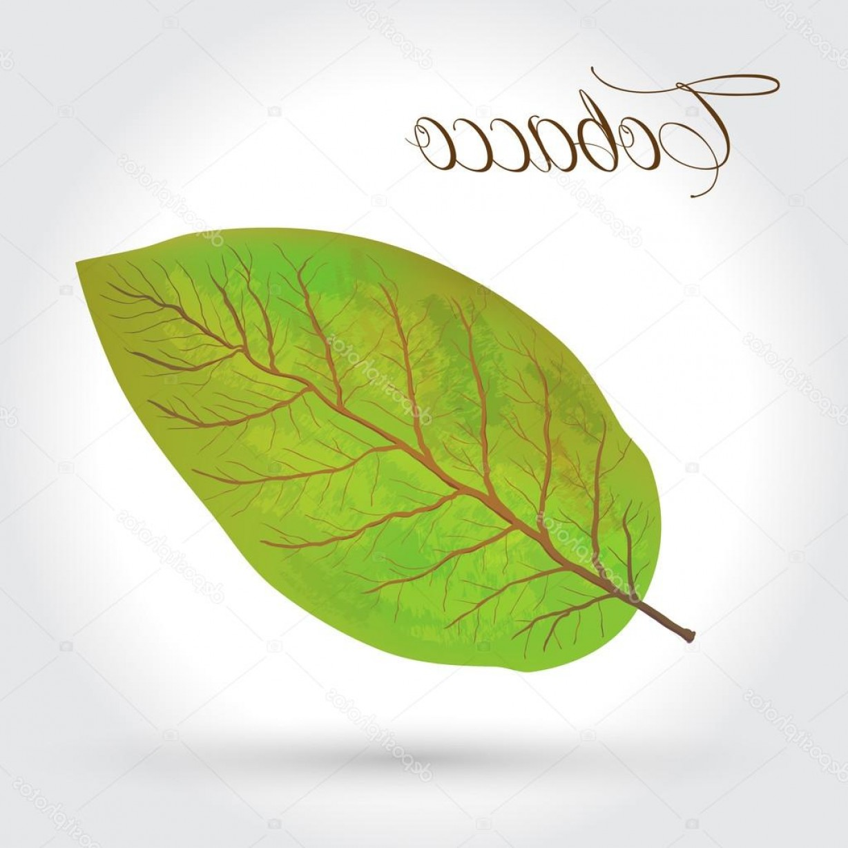 1228x1228 Stock Illustration Tobacco Leaves Vector Illustration Arenawp