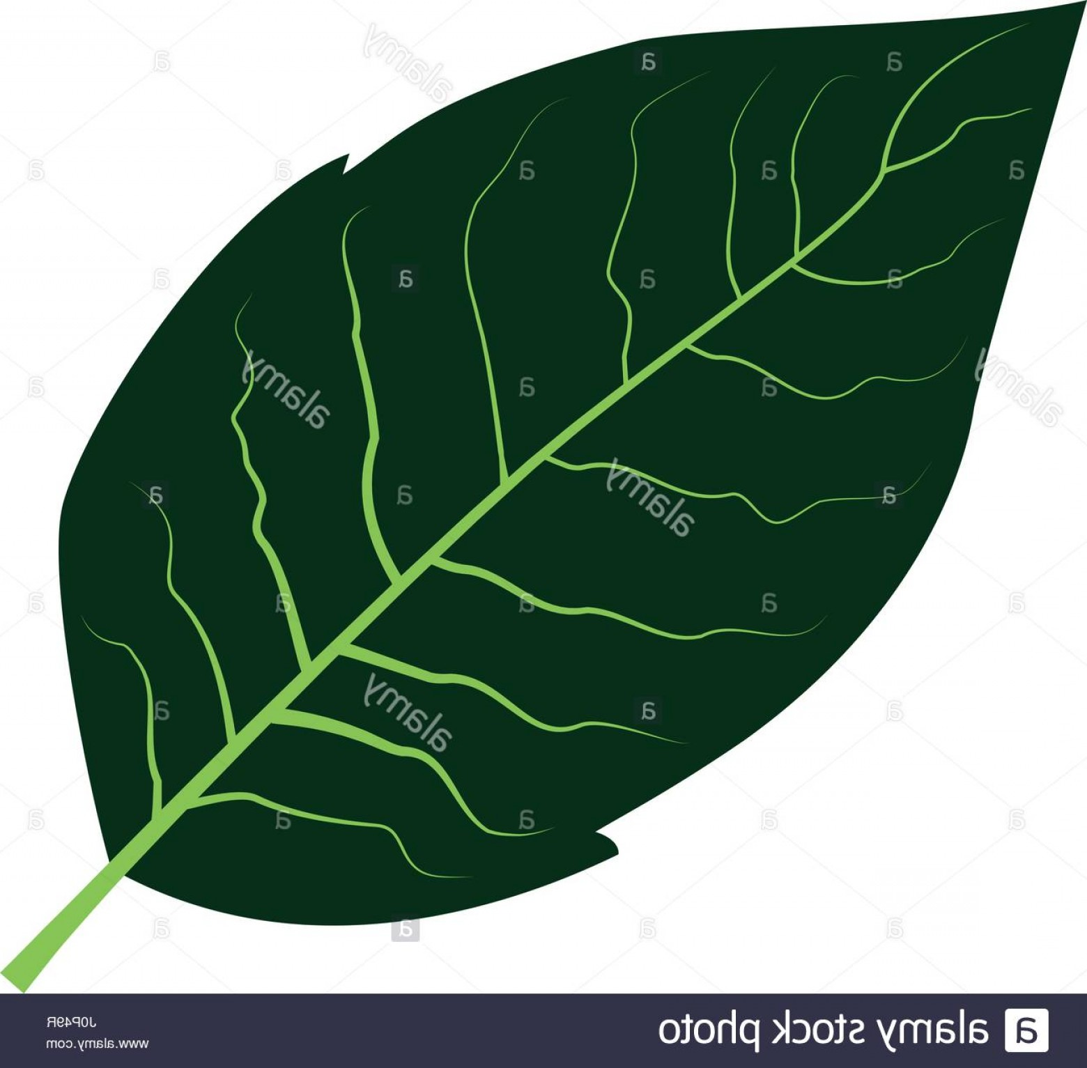 1560x1533 Stock Photo Tobacco Leaf Vector Illustration Geekchicpro