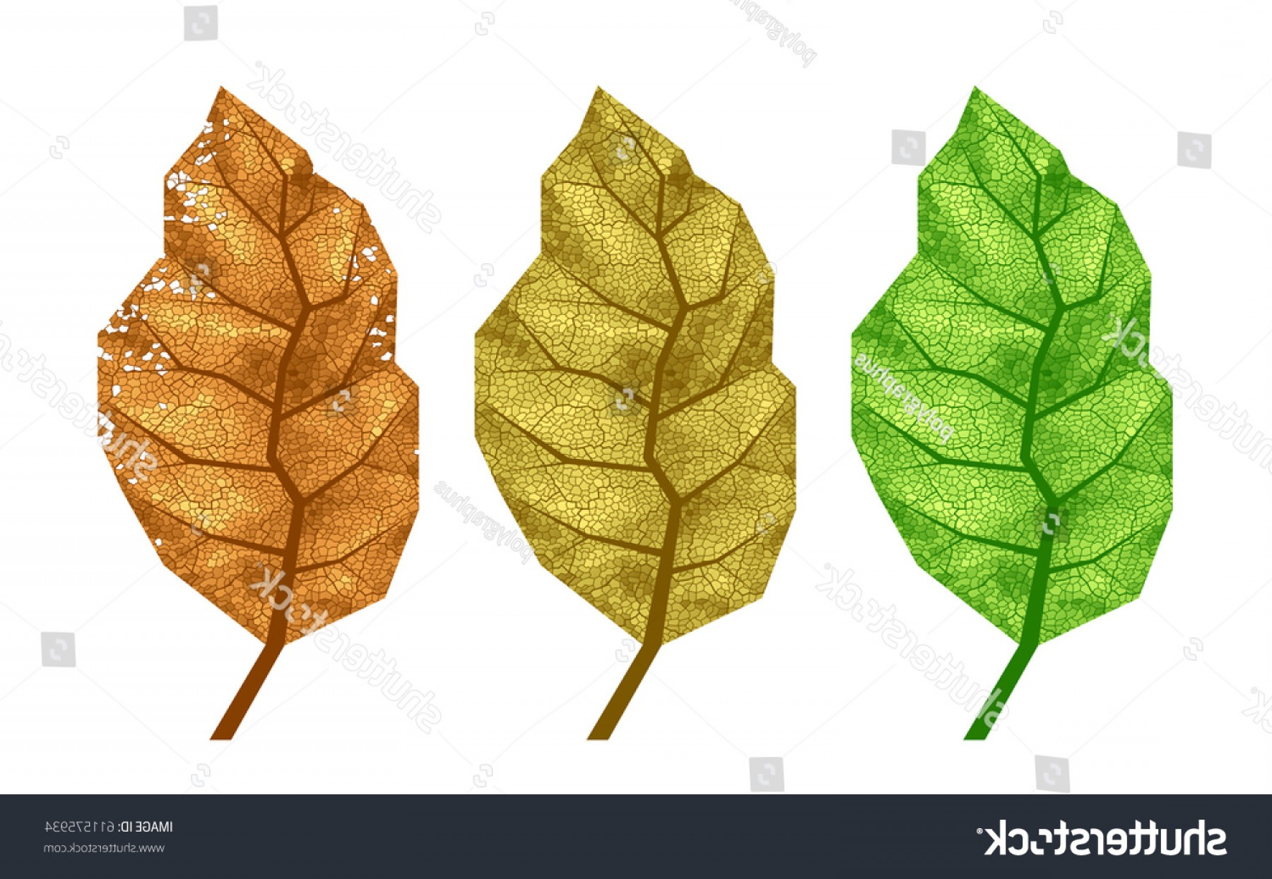 1800x1245 Three Vector Tobacco Leaves Veins Eps Lazttweet