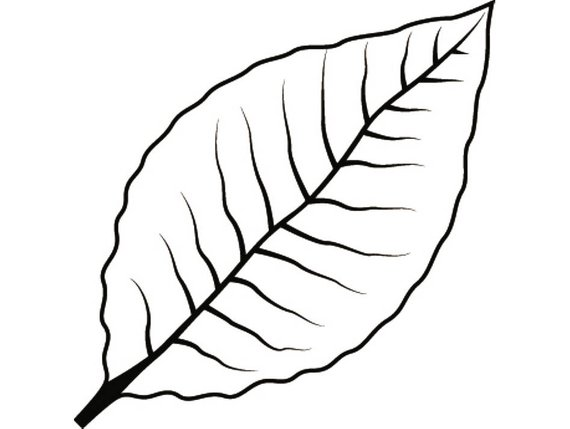 570x429 Tobacco Leaf 2 Smoker Cigar Smoking Smoke Burning Smoke Blunt Etsy