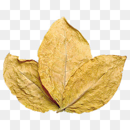 260x260 Tobacco Leaf Png, Vectors, Psd, And Clipart For Free Download