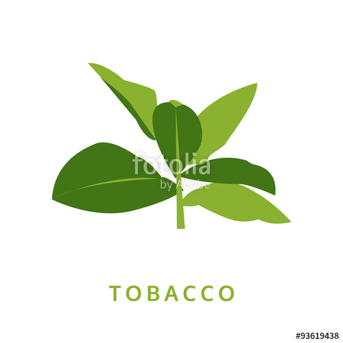 500x500 Tobacco Leaf Vector