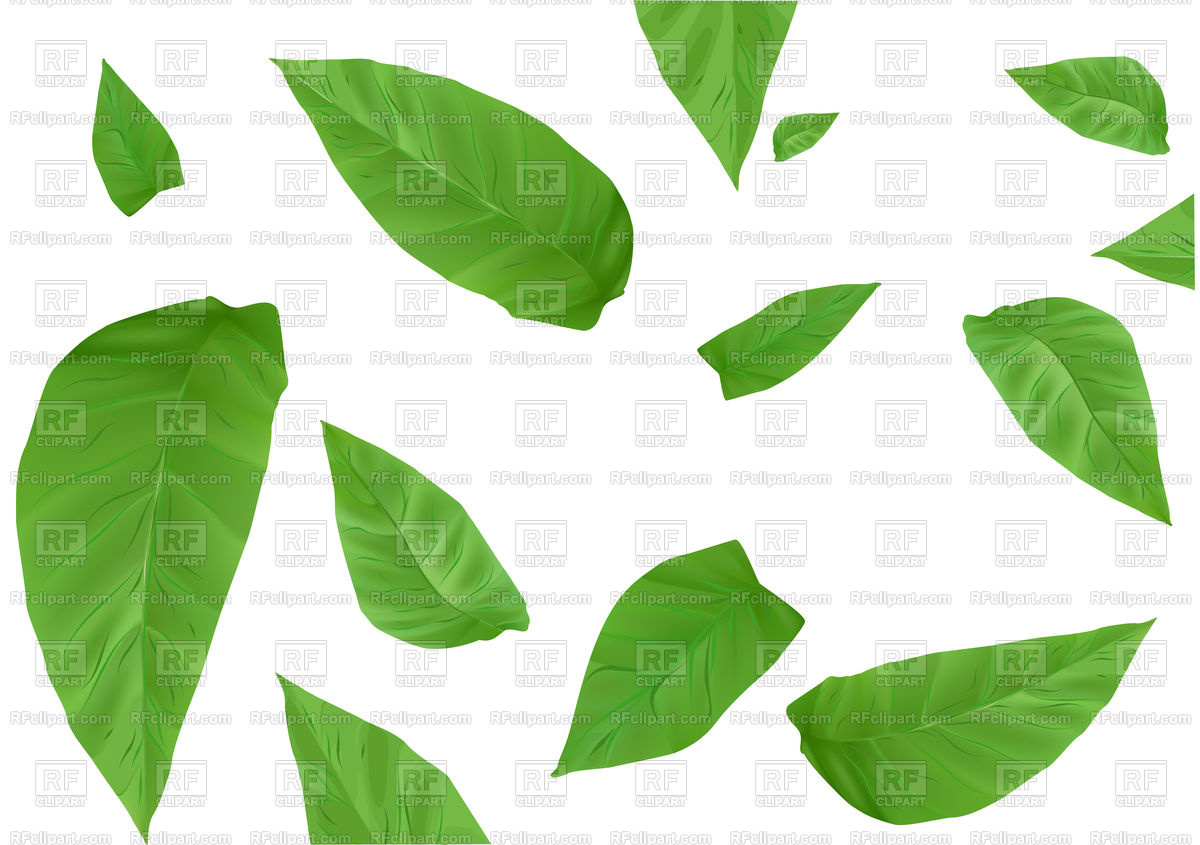 1200x845 Tobacco Leaves Isolated On A White Background Vector Image