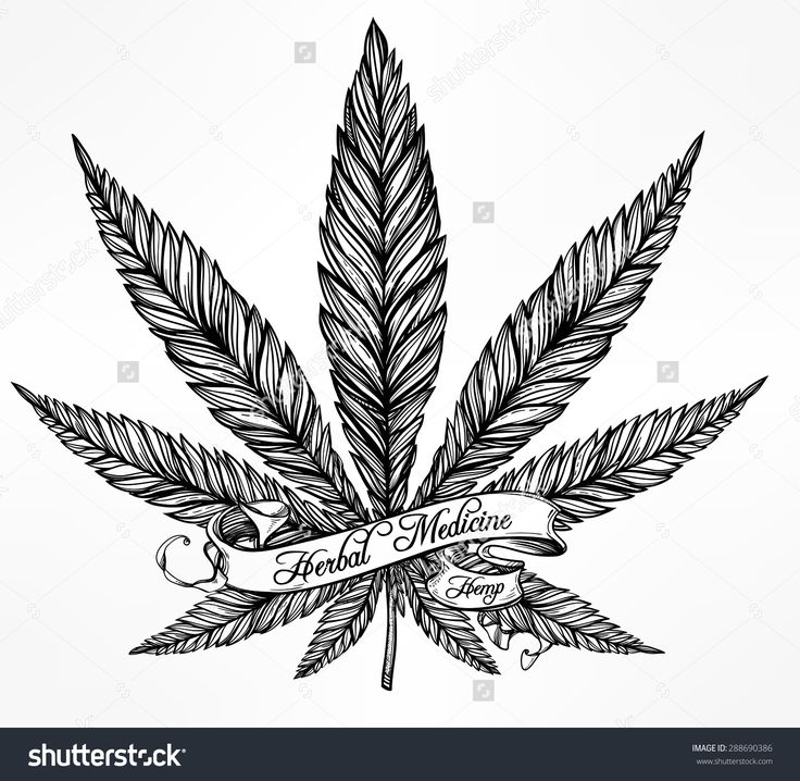 736x718 Marijuana Clipart Tobacco Leaf