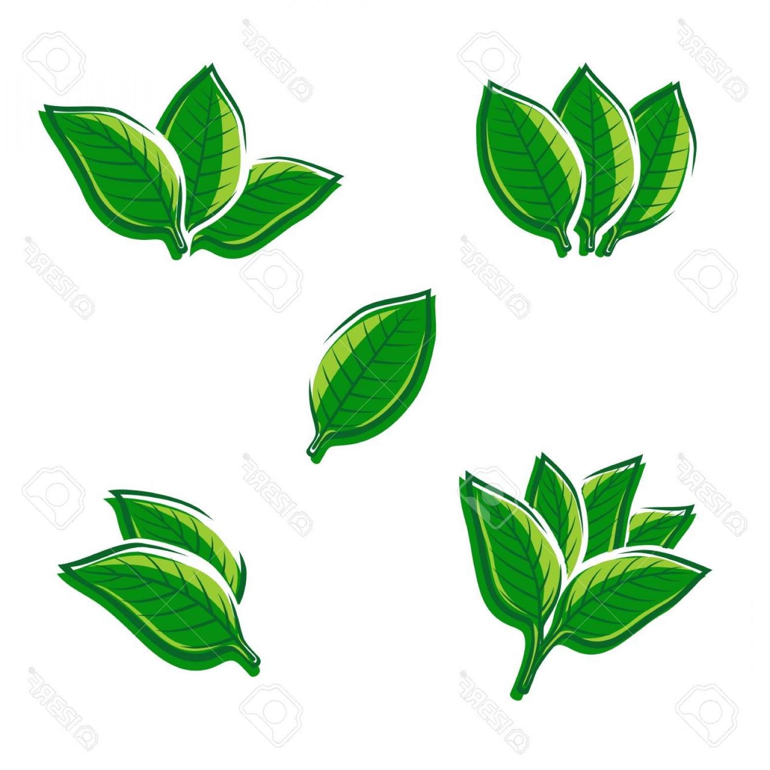 1560x1560 Photostock Vector Tobacco Leaf Set Vector Illustration Geekchicpro