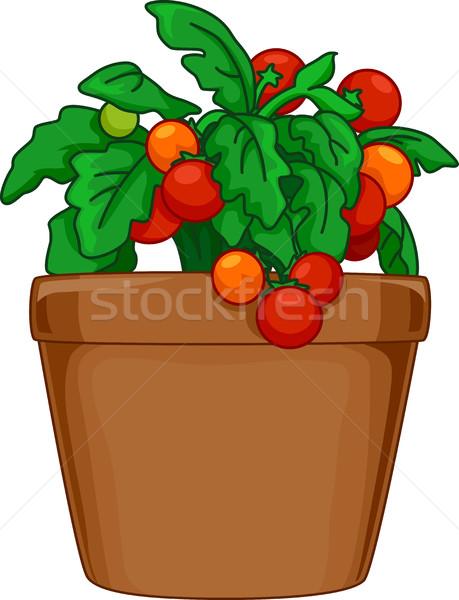 459x600 Indoor Tomato Plant Vector Illustration Lenm ( 7319818) Stockfresh