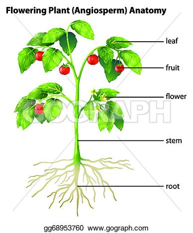 388x470 Parts Of A Tomato Plant Clipart Amp Parts Of A Tomato Plant Clip Art