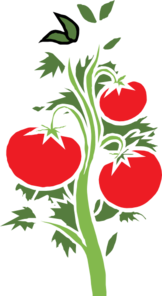 162x296 Collection Of Free Tomato Vector Animated. Download On Ubisafe