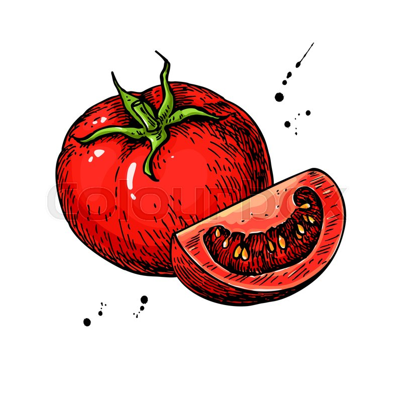 800x800 Tomato Vector Drawing. Isolated Tomato And Sliced Piece. Vegetable