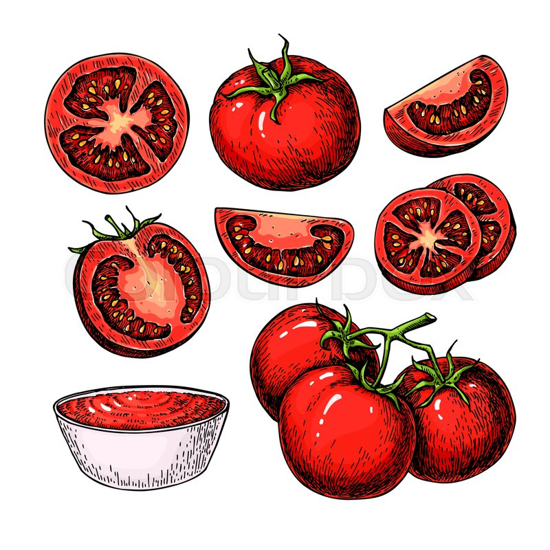 800x800 Tomato Vector Drawing Set. Isolated Tomato, Branch, Sliced Piece