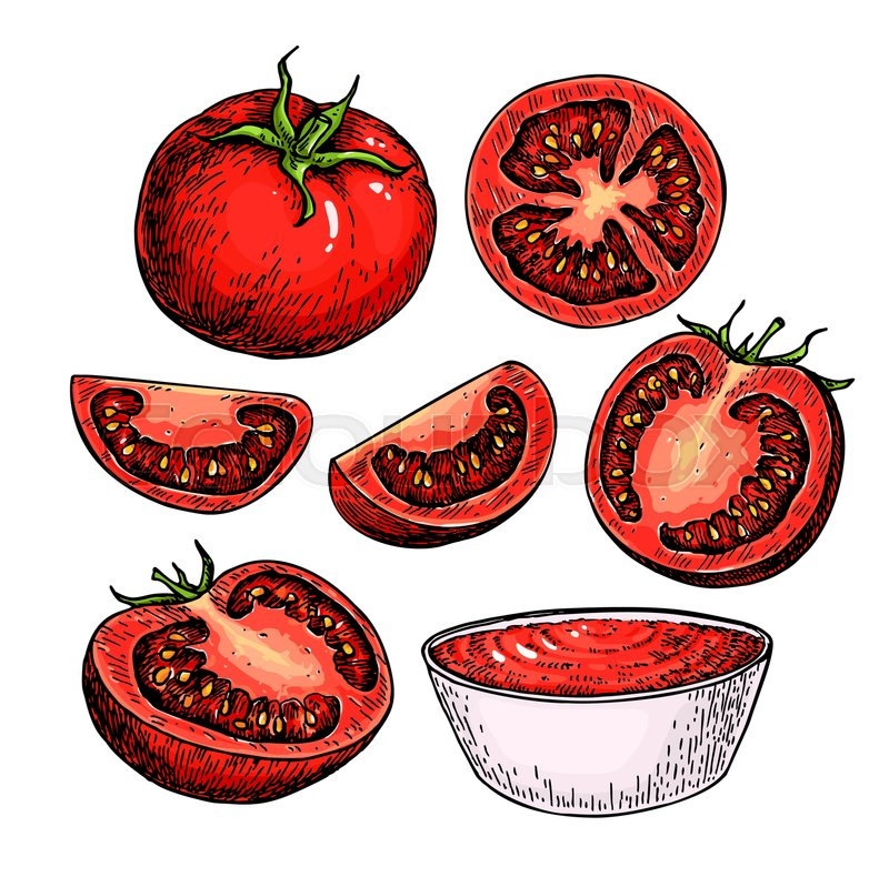 800x799 Tomato Vector Drawing Set. Isolated Tomato, Sliced Piece And