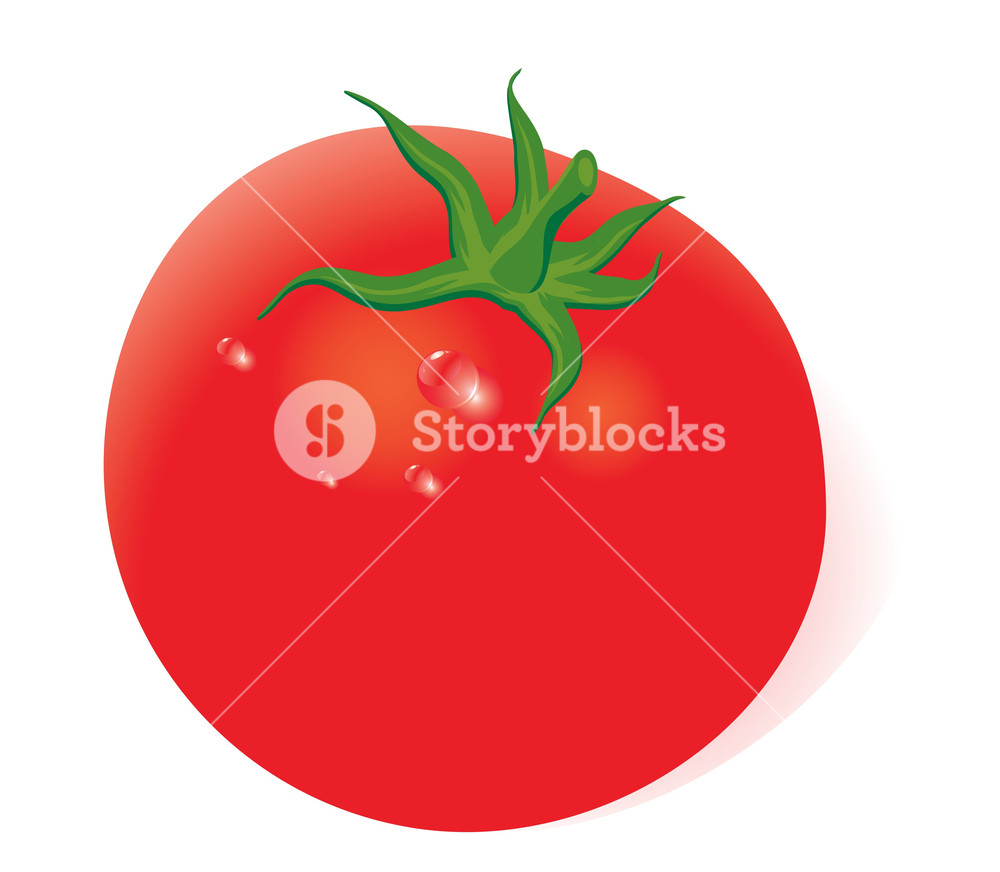 1000x872 Fresh Tomato. Vector. No Gradient Meshes Used