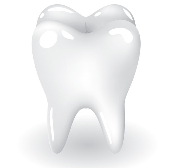 600x560 Free Tooth Vector Art Download Free Vector Art Free Vectors