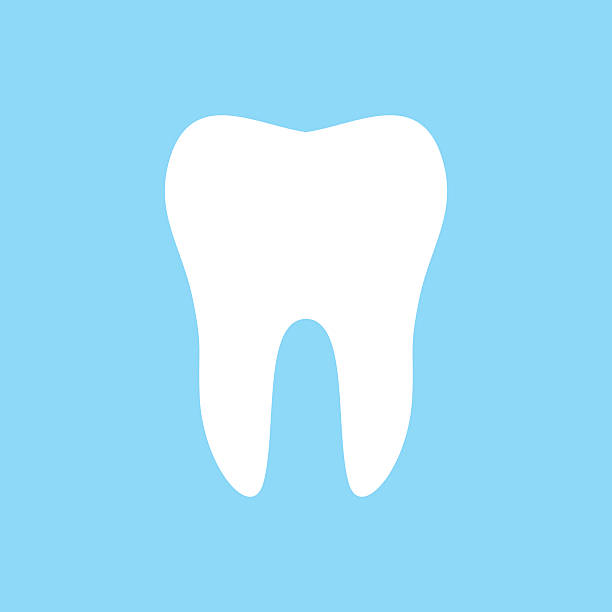 612x612 Pictures Tooth Vector Art,