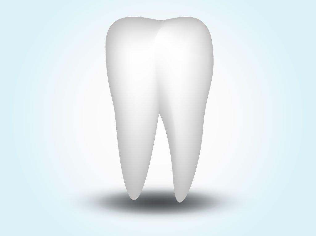 1024x765 Vector Tooth Vector Art Amp Graphics