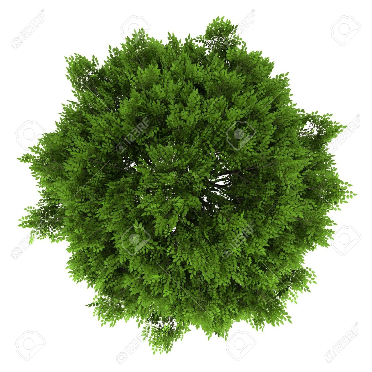 1300x1300 Tree Png Top View Transparent Tree Top View.png Images. Pluspng