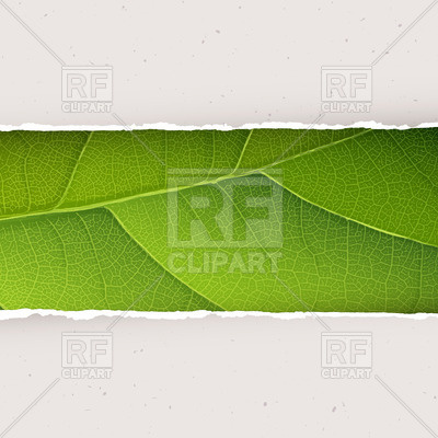 400x400 Green Leaf Texture Under Torn Paper Vector Image Vector Artwork