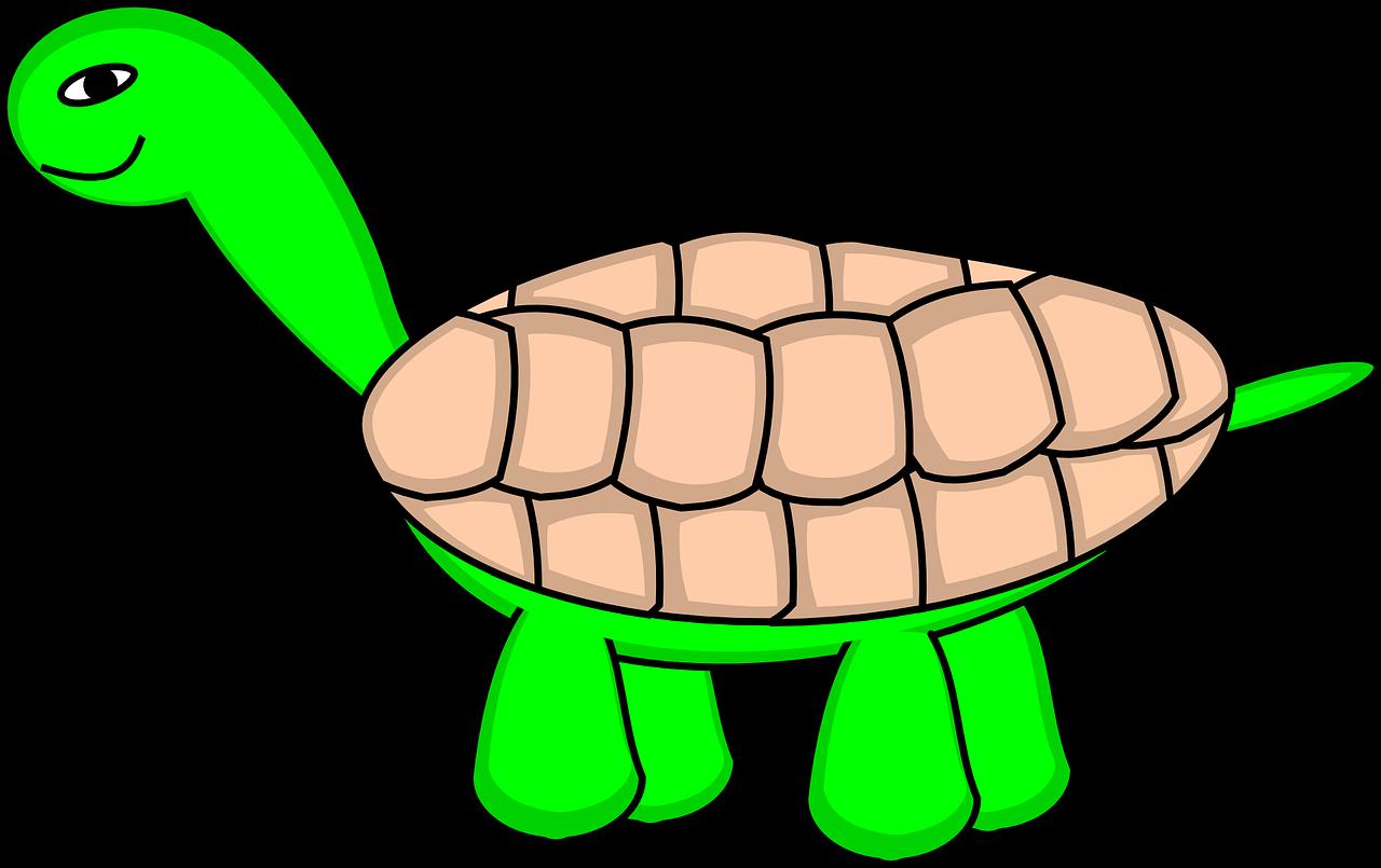 1280x805 Tortoise,turtle,tortoiseshell,tortoise Shell,smiling