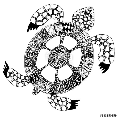 500x500 Hand Drawn Doodle Turtle. Vector Tortoise With Different Handrawn