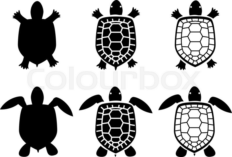 800x542 Set Of Turtle And Tortoise Icons,top View, Vector Stock Vector
