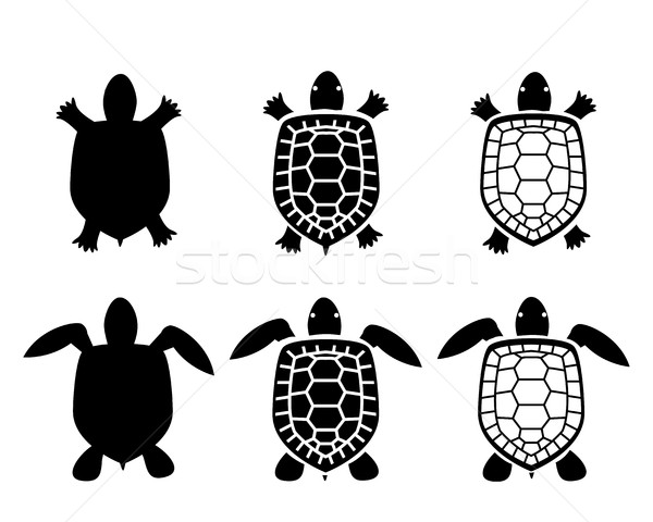 600x480 Set Of Turtle And Tortoise Icons,top View Vector Illustration