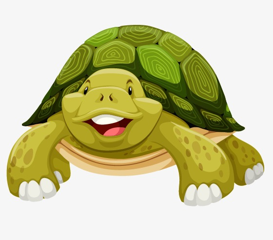 560x492 Tortoise, Cartoon Green Turtle, Tortoise Vector Png And Vector For