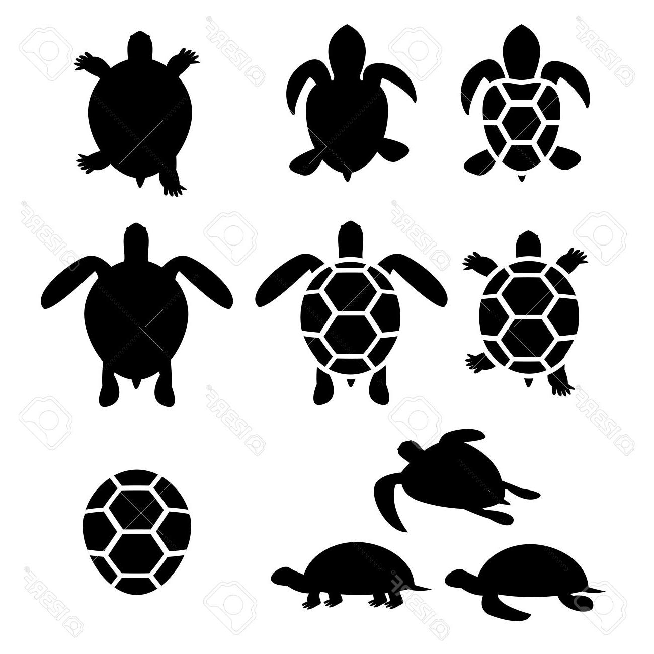 1300x1300 Unique Set Of Turtle And Tortoise Silhouette Vector Design