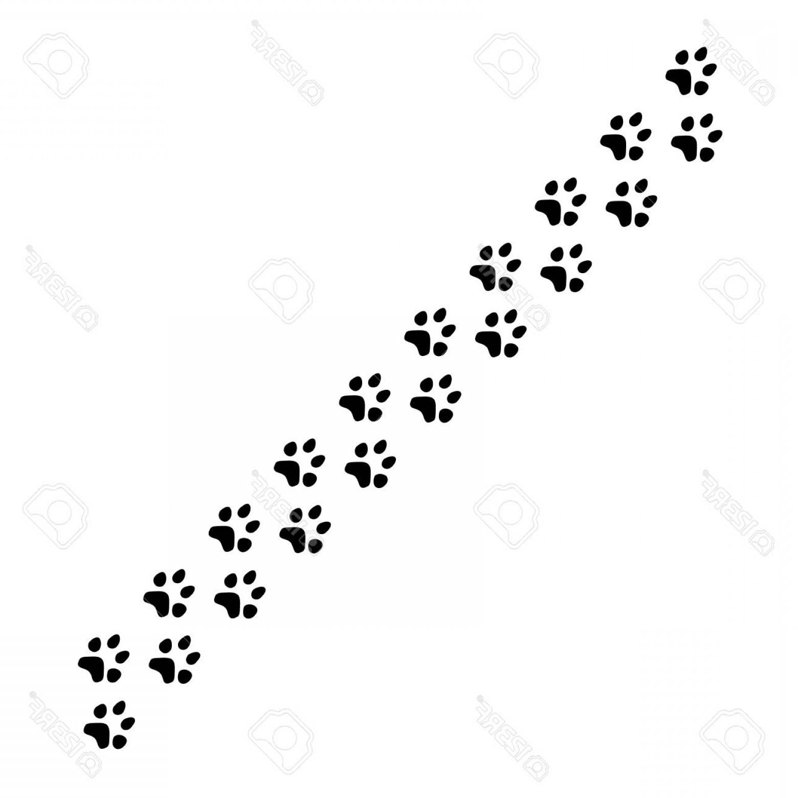 1560x1560 Photostock Vector Vector Illustration Black Silhouette Dog