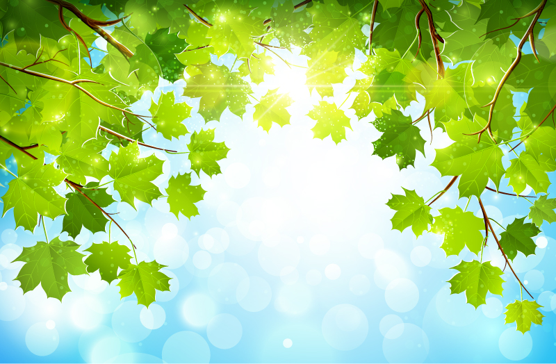 800x524 Plane Tree Background Vector Free Vector Background Download