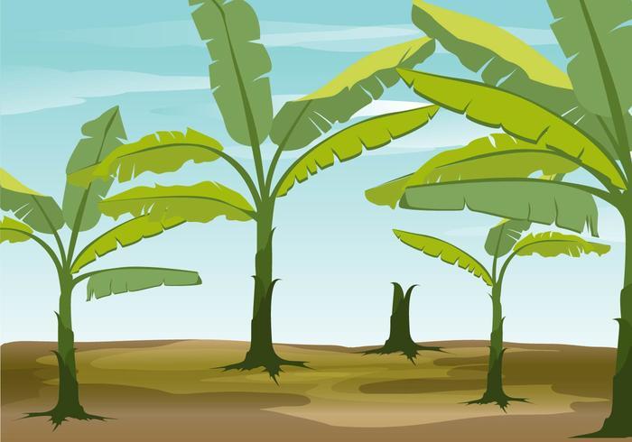 700x490 Banana Tree Vector Background