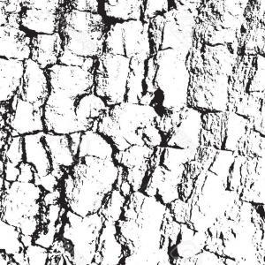 300x300 Old Wood Texture Tree Bark Vector Lazttweet