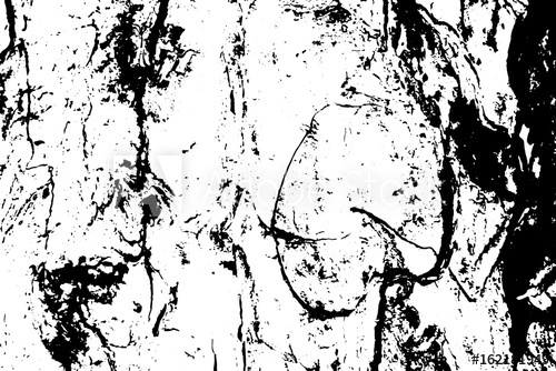 500x334 Old Obsolete Tree Bark Vector Texture. Black And White Bark
