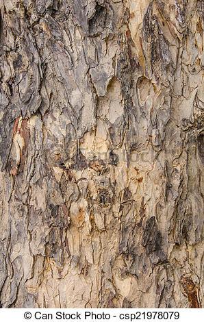 298x470 Pattern Clipart Tree Bark