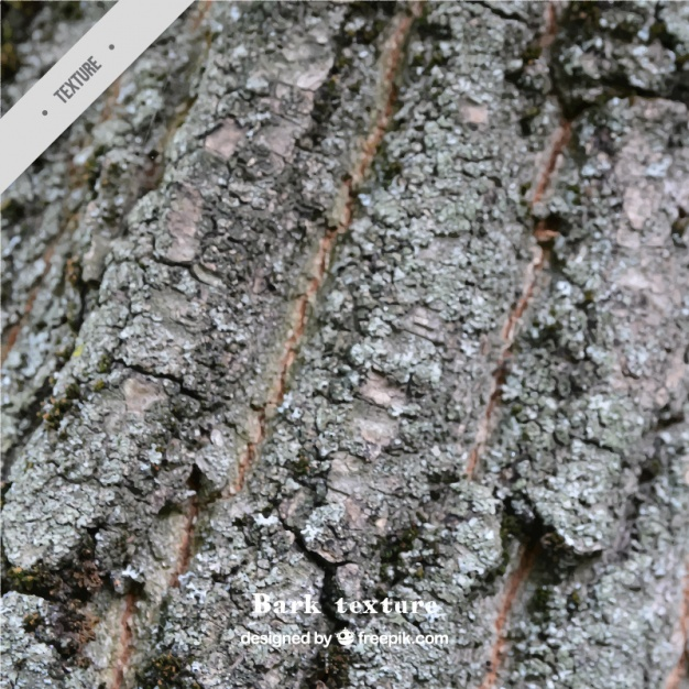 626x626 A Tree Bark Texture Vector Free Download
