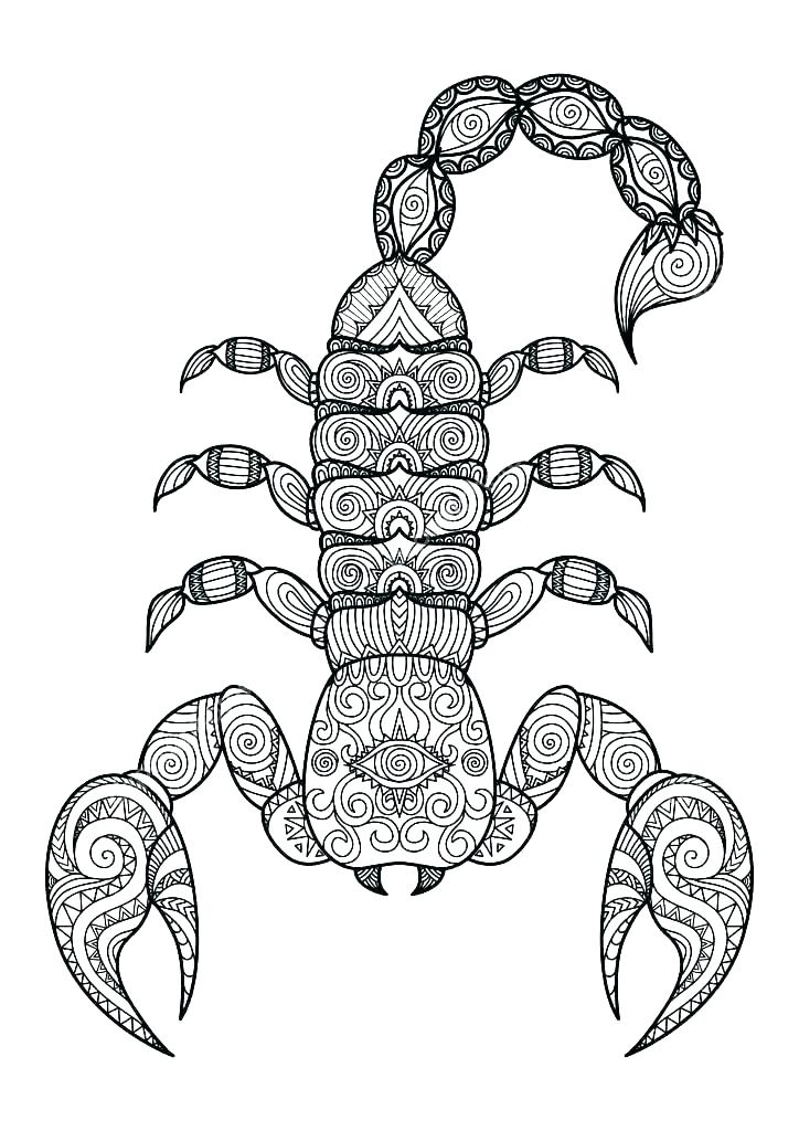 724x1024 Scorpion Coloring Pages Scorpion Coloring Pages