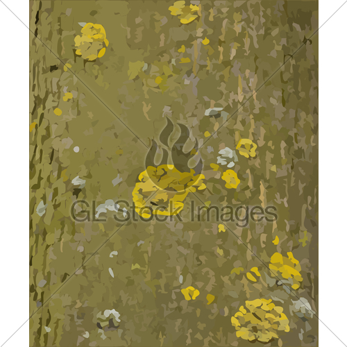500x500 Tree Bark With Lichens Vector Texture Gl Stock Images